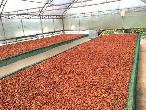 ben-tre-dried-beans